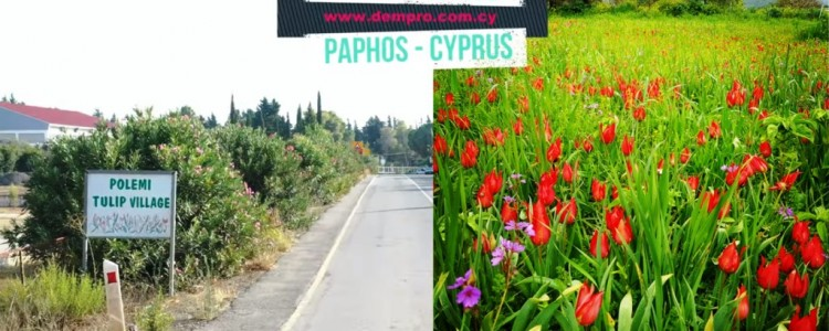 Polemi Village in Paphos, Cyprus