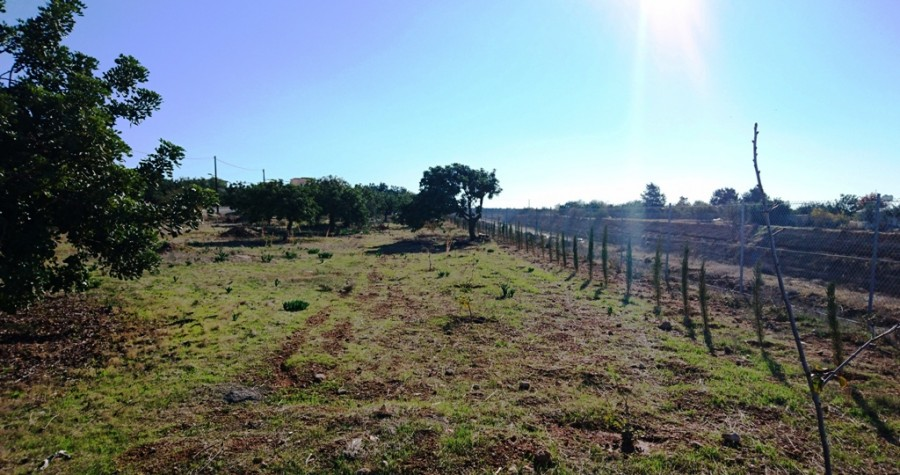 For Sale Residential Plots in Konia, Paphos